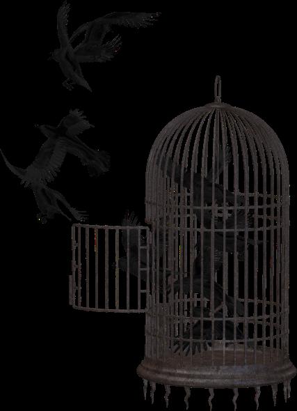 crow-2191180_1920